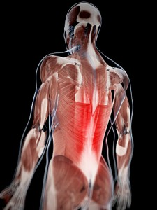 muscle pain in the back